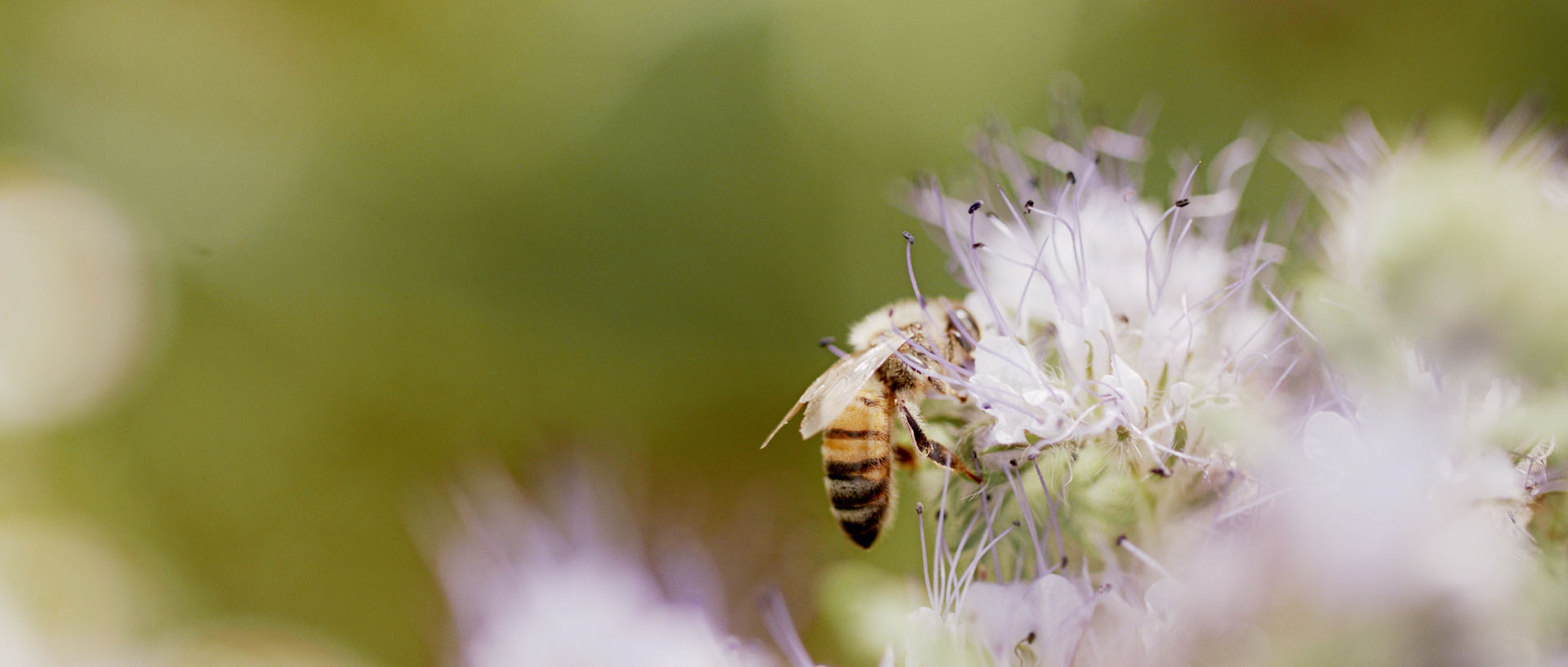 Mövenpick Swiss Honey Almond
